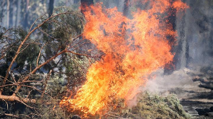 Испания в 2018 году пострадала от лесных пожаров сильнее других стран ЕС.