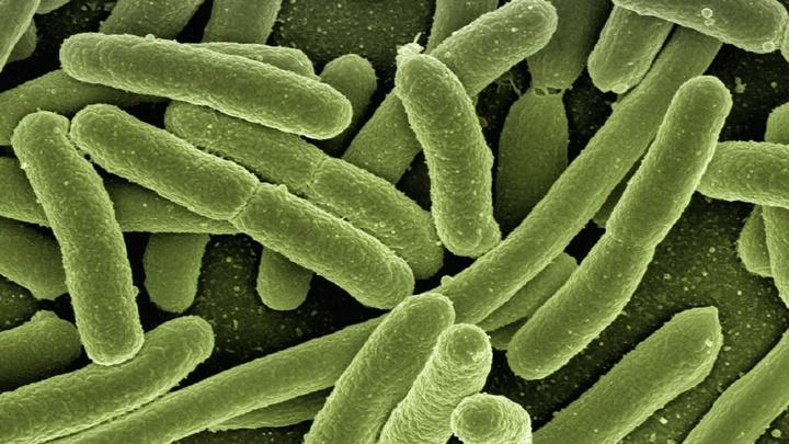 Исследователи впервые создали бактерий, которые питаются углекислым газом из окружающей среды.