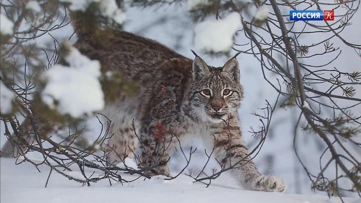 На фестивале «Первозданная Россия» показали фотографии дикой природы