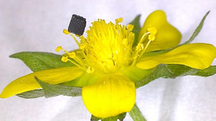 Создан новый метод 3D-печати из графена