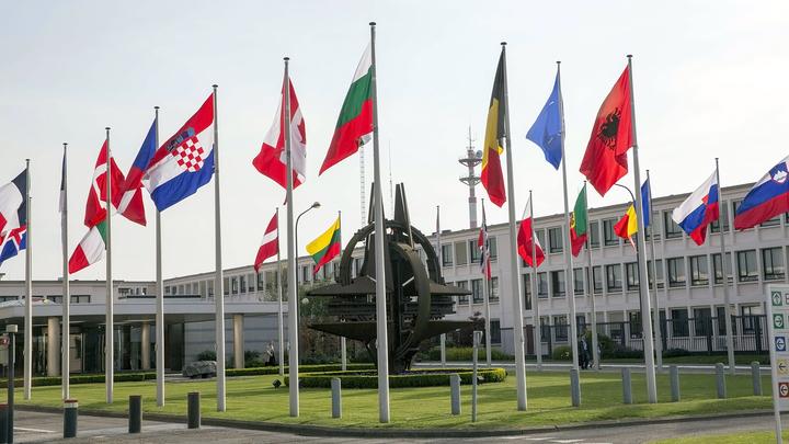 НАТО сожалеет: как альянс отреагировал на ответные санкции России