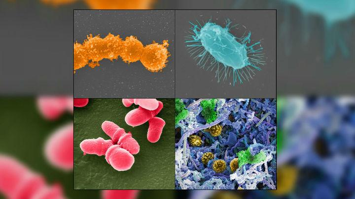 """Трансплантация кала """"поправляет здоровье"""" кишечных бактерий у онкобольных пациентов"""