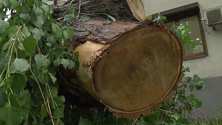 Мужчина пострадал при падении дерева в Москве