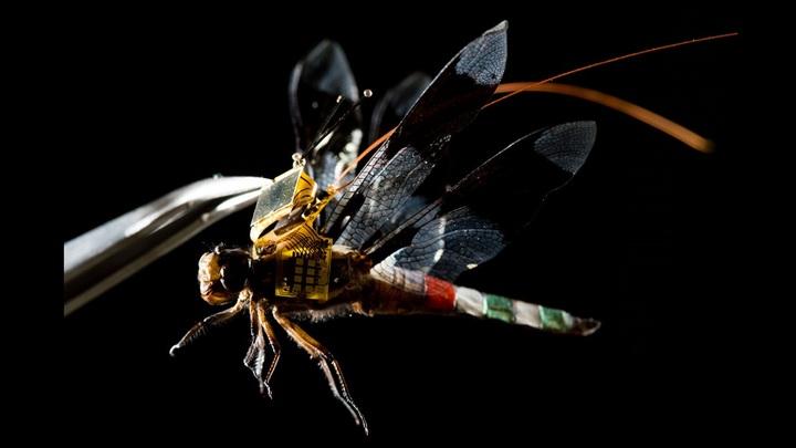 Стрекоза-киборг расправила крылья: инженеры показали первый полёт шпионского мини-дрона