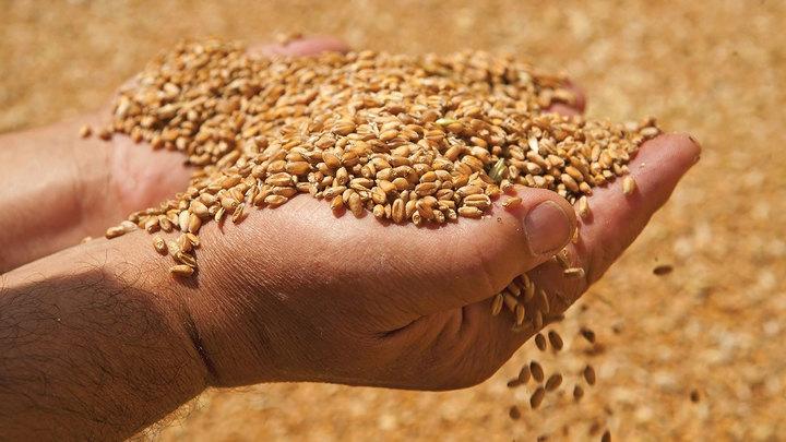 Государство будет покупать и продавать зерно, сахар для стабилизации цен
