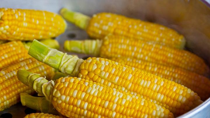 В России повысят экспортные пошлины на пшеницу, кукурузу и ячмень