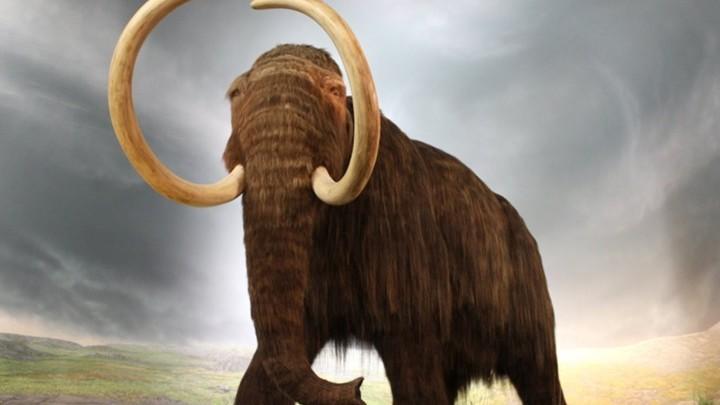Идея о клонировании шерстистого мамонта занимает умы учёных уже не первый год.