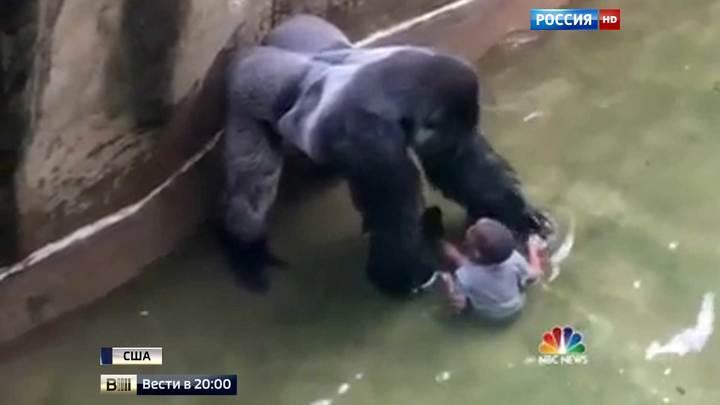Бронзовую статую гориллы Харамбе установили в Нью-Йорке