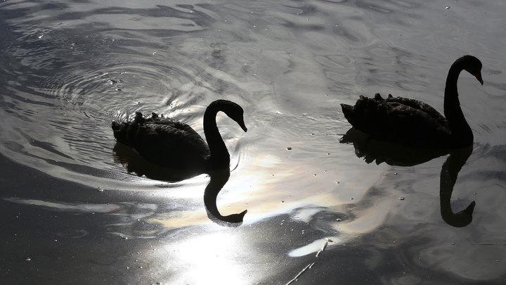 На Алтае в этом году отметят столетие зимовки лебедей