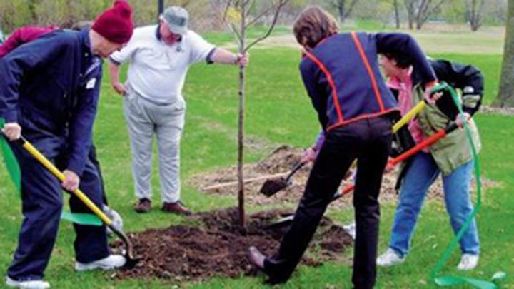 В Томской области посадят деревья для поддержки пострадавшей от пожаров Якутии