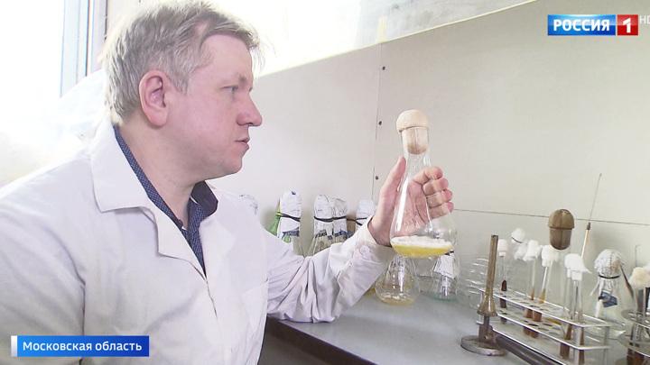 Древний гриб, обнаруженный в Арктике, может стать новым лекарством от рака