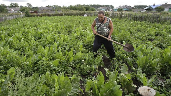 Треть россиян отказывается от газонов в пользу грядок