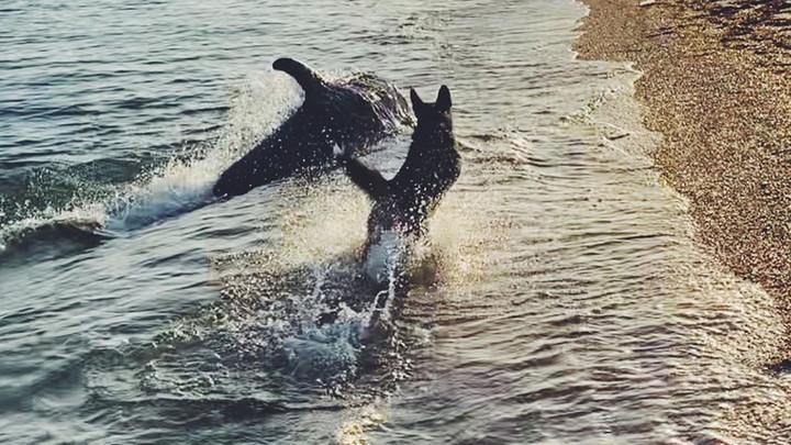 Игра дельфина с собакой на крымском пляже попала на видео