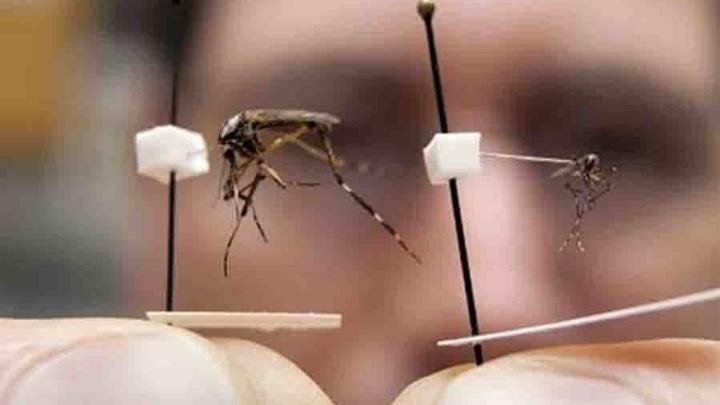 Медики предупредили о смертельном буньявирусе