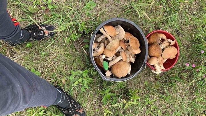 Бабушка приготовила: четверо детей отравились грибами под Харьковом