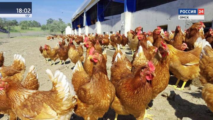 Жителям Омской области запрещено выпускать домашних птиц на водоемы