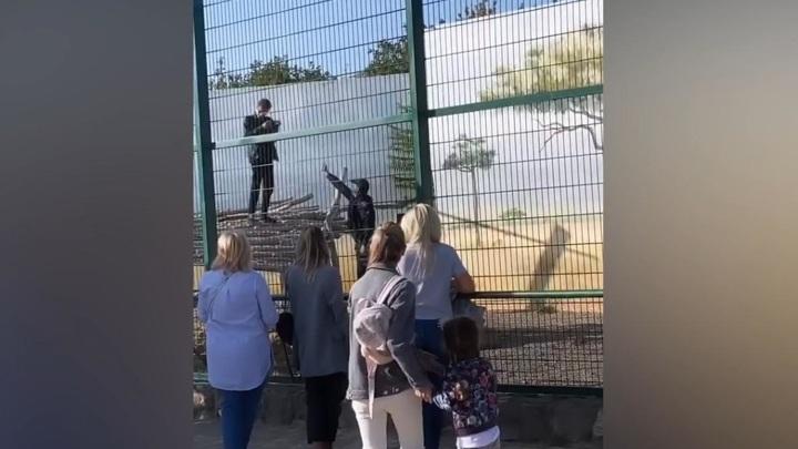 Блогер забрался в клетку со львами ради неповторимых селфи