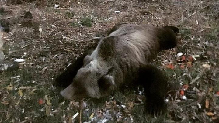 Туристку спасли из лап медведя на Камчатке
