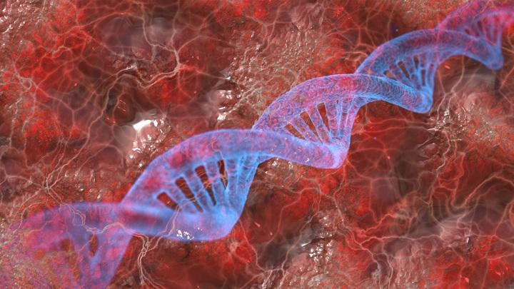 Генетическое наследие неандертальцев делает людей уязвимыми перед COVID-19.