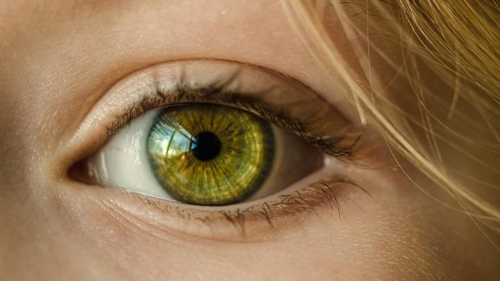 У млекопитающих есть гены, способные восстанавливать сетчатку глаза.