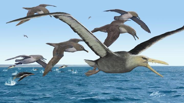 Огромные ложнозубые птицы были грозными хищниками морей.