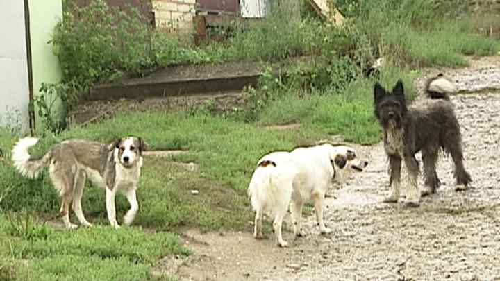 Подмосковный Воскресенск атакуют стаи бродячих собак