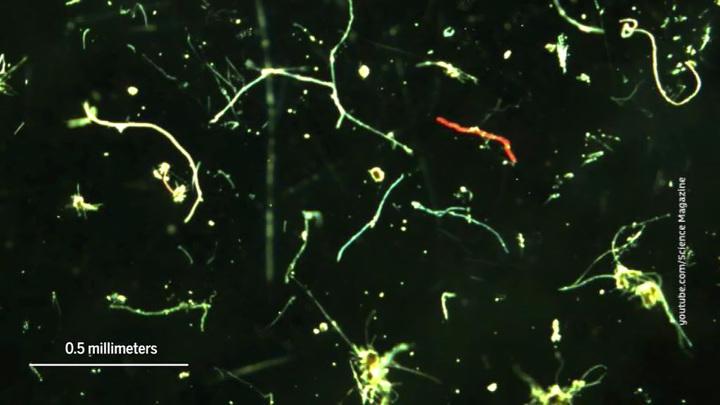Микропластик загрязнил уже и Антарктиду