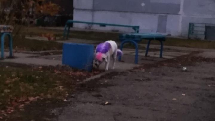 По Тольятти гуляет розово-фиолетовая собака