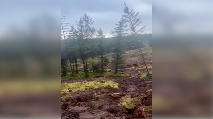 """""""Миграцию"""" елок сняли на видео во время оползня в Ирландии"""