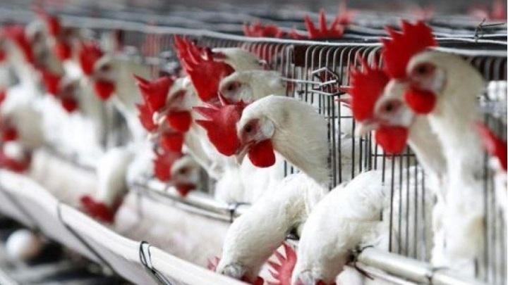 В России приступили к созданию вакцины от штамма птичьего гриппа H5N8