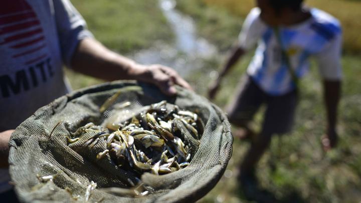 Золотая волна: шторм обогатил рыбаков