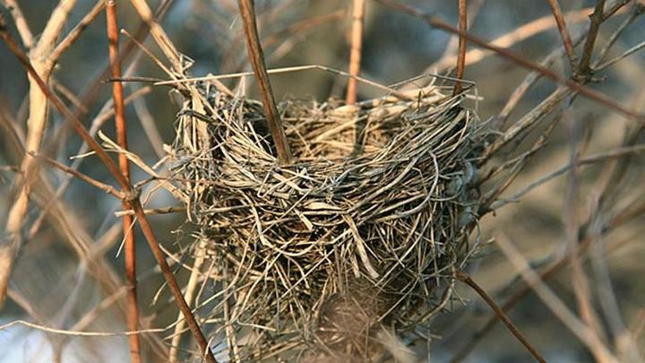 В Ярославской области готовят искусственные гнезда для уток