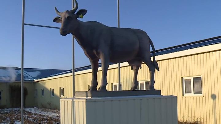 На молокозаводе в Оренбуржье исчез 200-килограммовый памятник корове