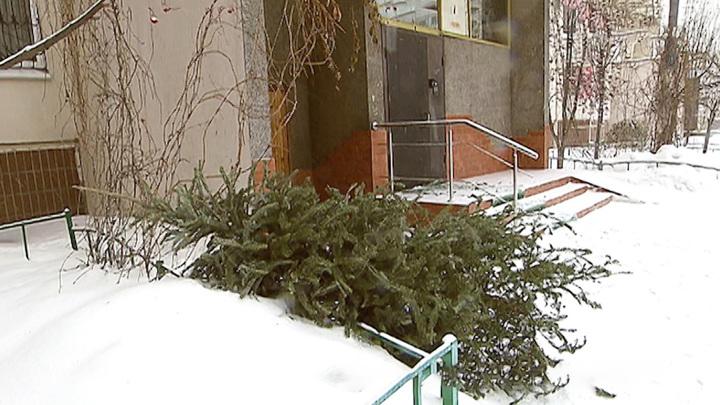 Около 25 тыс. новогодних елей сдали москвичи на утилизацию