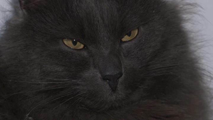 Кот, сбежавший при посадке на рейс, через полгода вернулся в семью