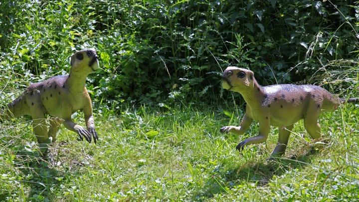"""Учёные впервые """"заглянули под хвост"""" пситтакозаврам."""