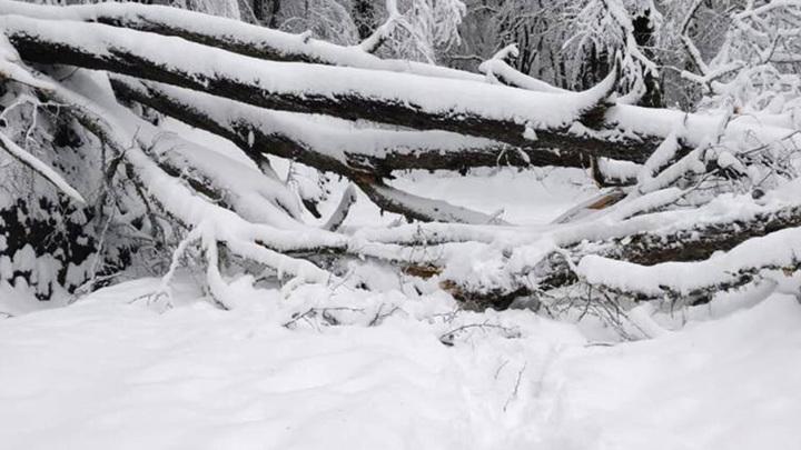 Из-за ветра и снега оказались заблокированы дороги в Кавказском заповеднике