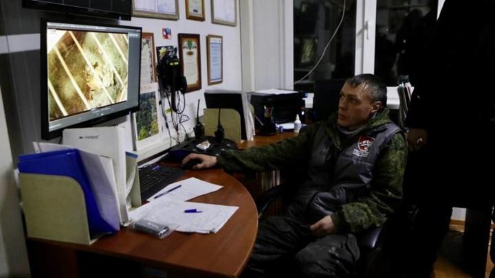 Три амурских тигра проходят реабилитацию в Приморском крае