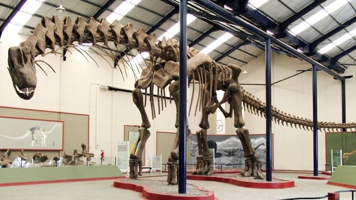Новый динозавр крупнее даже аргентинозавра (на фото).