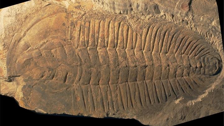 25-сантиметровое существо было одним из древнейших известных каннибалов.