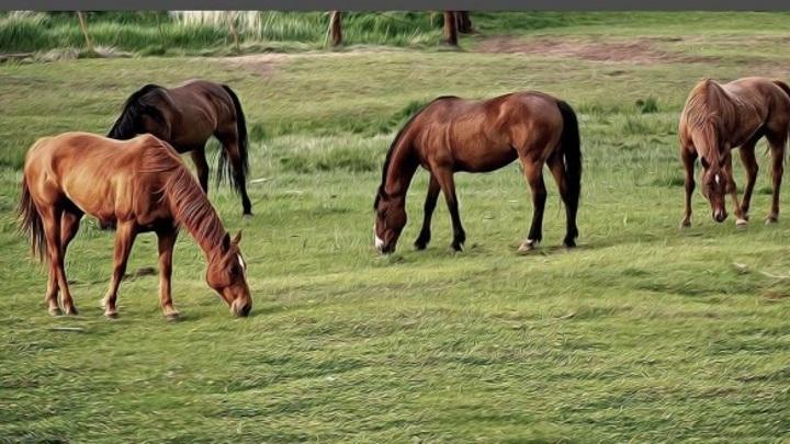 В Вологодской области пастух заплатит за лошадь в бегах