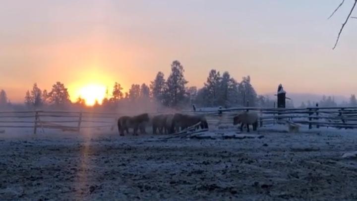 От якутских морозов умирают животные