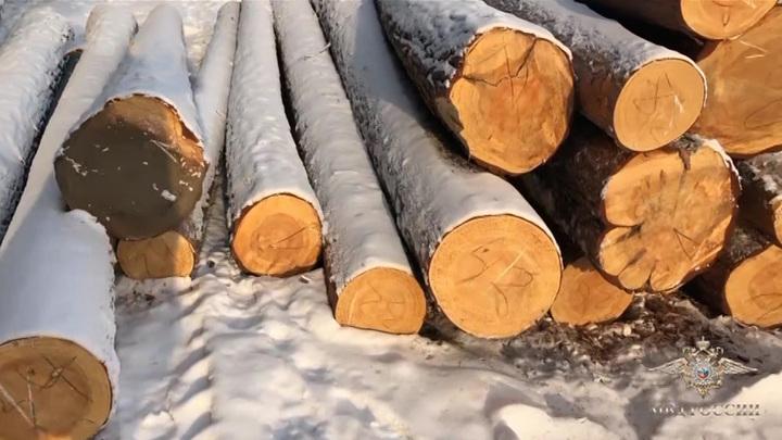 В Прибайкалье банду лесорубов будут судить за многомиллионный ущерб