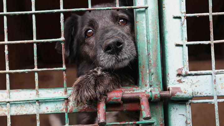 В Новосибирске могут устроить перепись бездомных собак и кошек