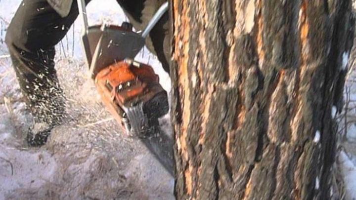 В Северной Осетии на школьника упало спиленное дерево, ребенок погиб