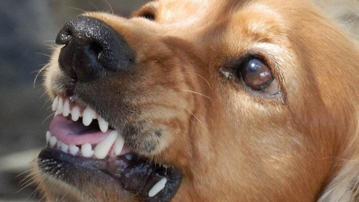 В Самаре бродячие собаки покусали женщину