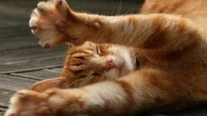 Мэрский кот Кипиш устроил массовый флешмоб на Ставрополье