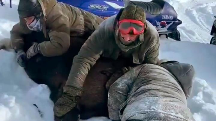Арестованы трое подозреваемых в расправе над лосихой