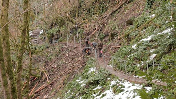 В Сочи специалисты расчищают тропы в Тисо-самшитовой роще