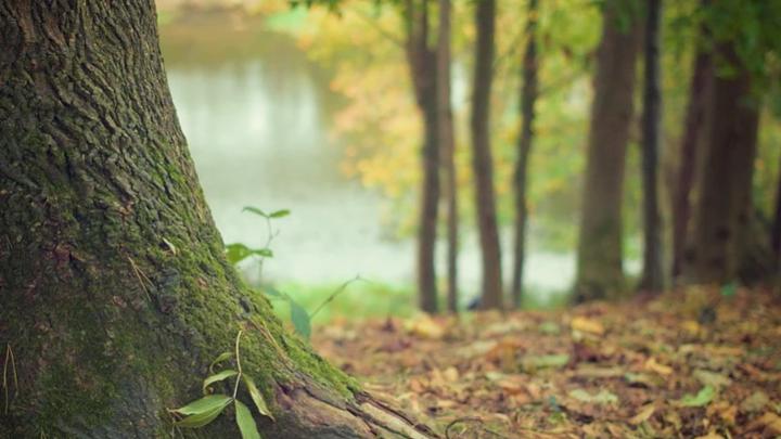 На Дону в ближайшие два года восстановят леса на площади 3300 гектаров
